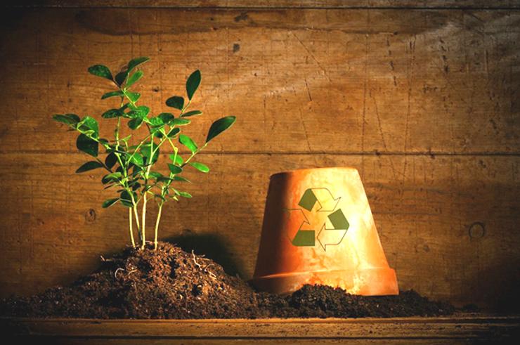 나무 재테크 나무 재테크 요즘 뜨는 나무 재테크! 어디까지 알고 있니?  나무-재테크